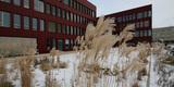 Eiskalt! Winterfeste Gräser auf der gestalteten Freifläche vor dem Neubau des Instituts für Informatik. © 2016 Betrieb für Bau und Liegenschaften Mecklenburg-Vorpommern
