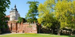 Einst prägte der stattliche Ginkgo den landschaftlichen Teil des Schlossgartens.