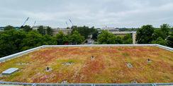 Grün! Extensive Dachbegrünung auf dem ZMF. Im Hintergrund links die Flutlichtmasten des Ostsee-Stadions  rechts hinter dem Parkhaus der Neubau des Biomedicum. © 2020 Christian Hoffmann  FM MV