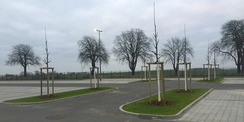 40 Bäume ließ das SBL Rostock auf dem Parkplatz pflanzen. So wird die versiegelte Fläche teilweise begrünt. © 2020 Polizeipräsidium Rostock