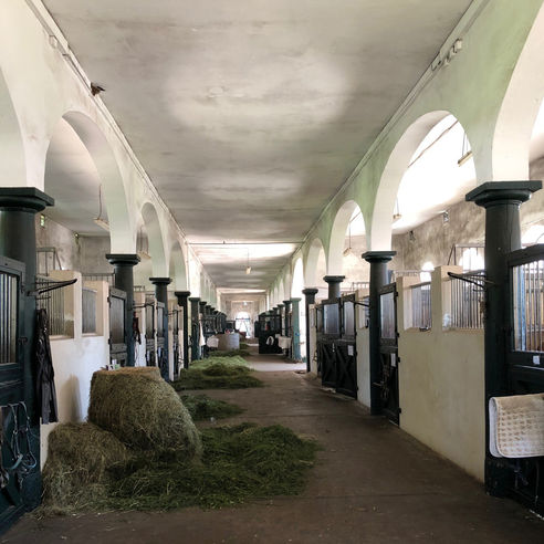 Nicht nur Heuschnupfen wird hier behandelt - Blick in den Stall zum Rossarzthaus. © 2018 Betrieb für Bau und Liegenschaften Mecklenburg-Vorpommern