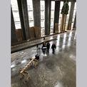 Gut vorbereitet: Carmen-Alina Botezatu (Leiterin)  Heike Wehrle (Projektleiterin) und Martina Bartsch (Projektmanagerin) vom Staatlichen Bau- und Liegenschaftsamt Rostock kurz vor dem Richtfest  dass am 14. Januar 2020 auf dem Uni-Campus in der Rostocker © 2020 Christian Hoffmann  Finanzministerium Mecklenburg-Vorpommern