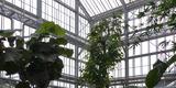 Da kein anderer Platz zur Verfügung steht  verbleiben die größten Pflanzen auch während der Sanierung im Palmenhaus. © 2020 SBL Greifswald