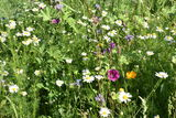 Blütenvielfalt.jpg