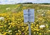 BW 3 mehrjährige Bienenweide der Kärntner Saatbau.jpg