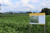 Blühpatenschaftsfläche im Kremstal WDG.jpg